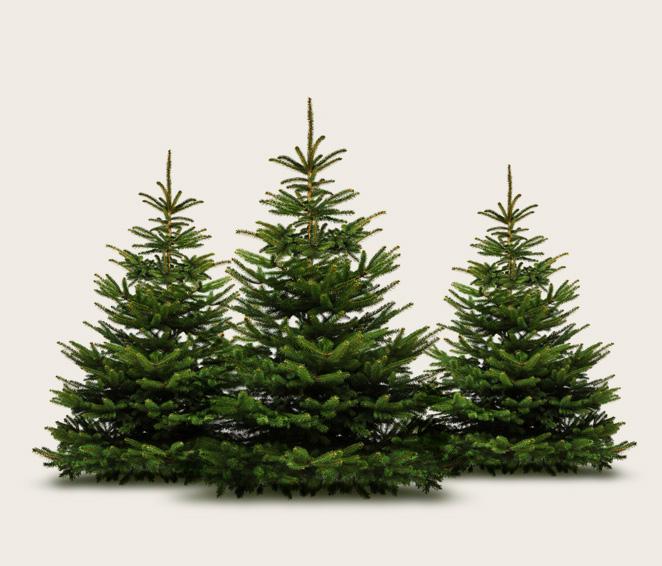 weihnachtsbaum kaufen in eschborn christbaum center. Black Bedroom Furniture Sets. Home Design Ideas